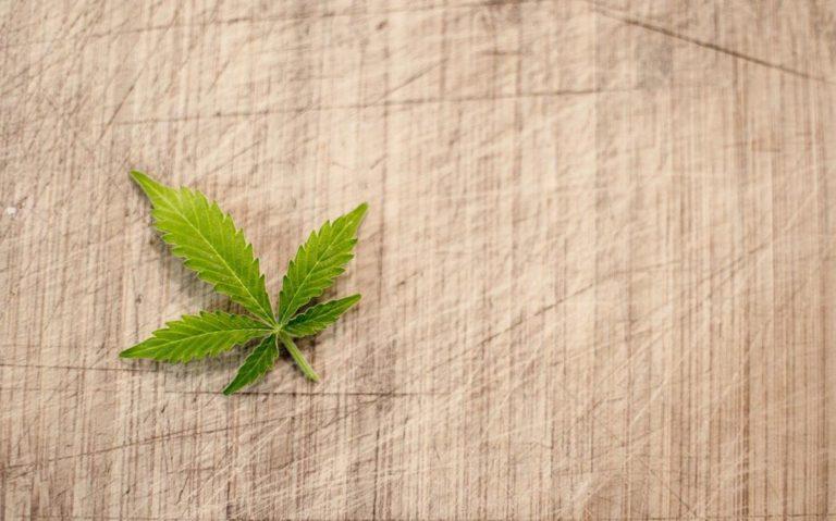 Czy feminizowane nasiona marihuany mają swoją specyfikę?